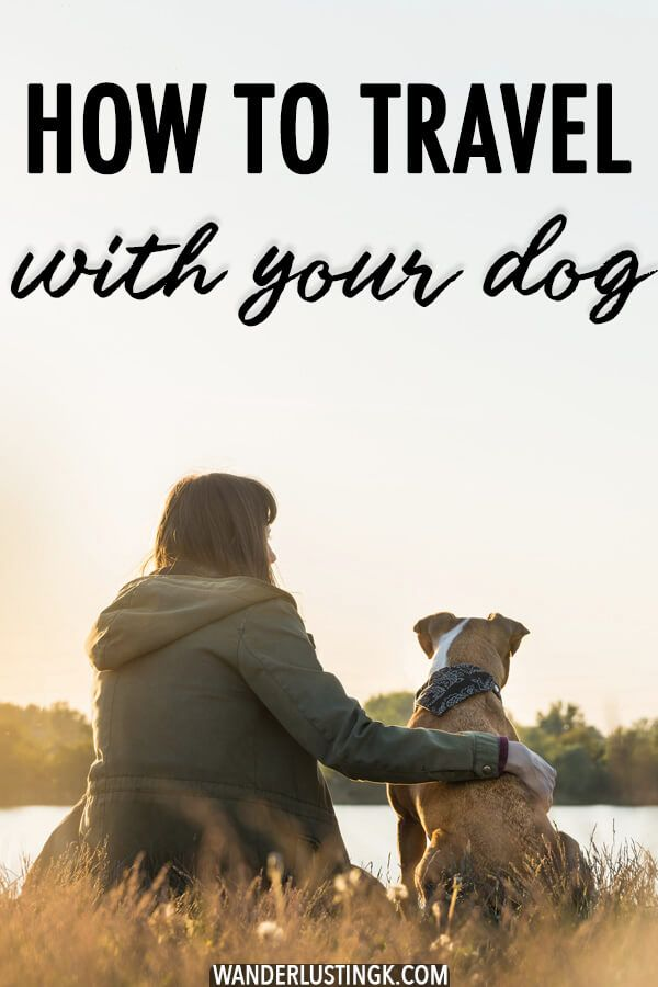 11 Things To Consider Before Traveling And Moving Abroad With Your Dog Travel Travel Abroad Culture Travel