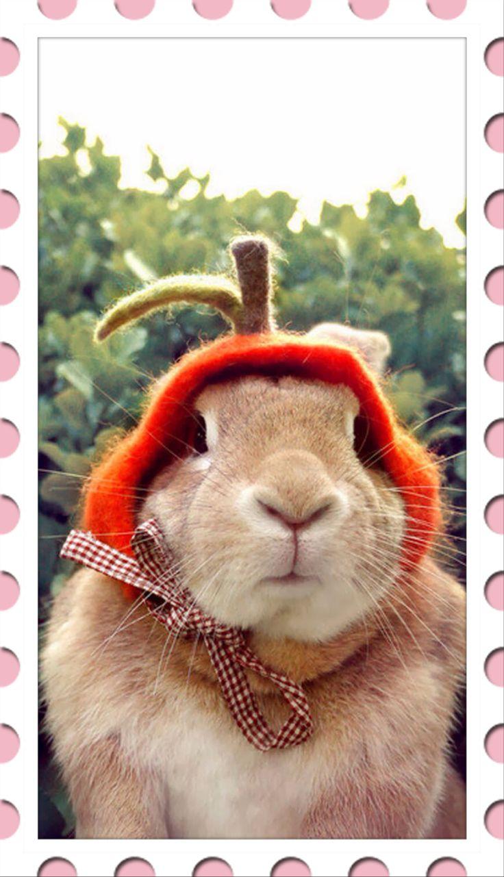 الأرنب من الحيوانات الأليفة  Pet rabbit