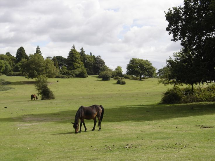 New Forest pony, near Bolton's Bench, Lyndhurst, New Forest