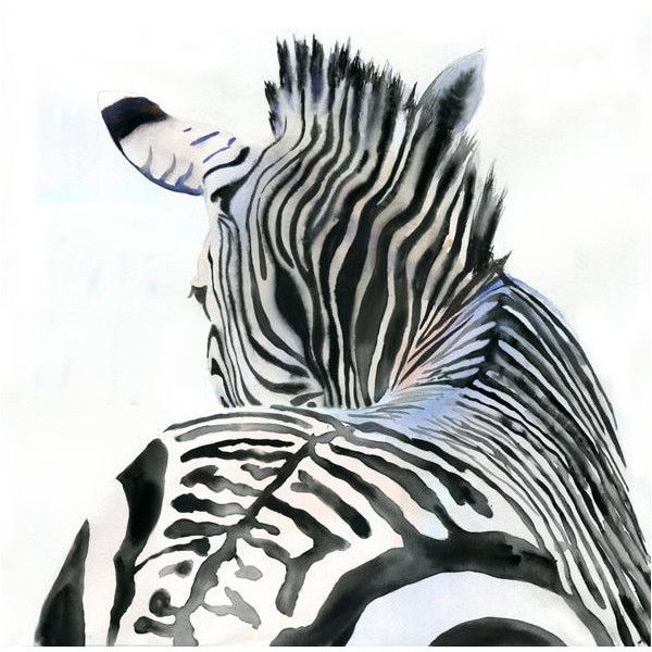 Zebra Art Print of Watercolor Painting Safari Africa ($25) ❤ liked on Polyvore featuring art, animals, drawings and fondo