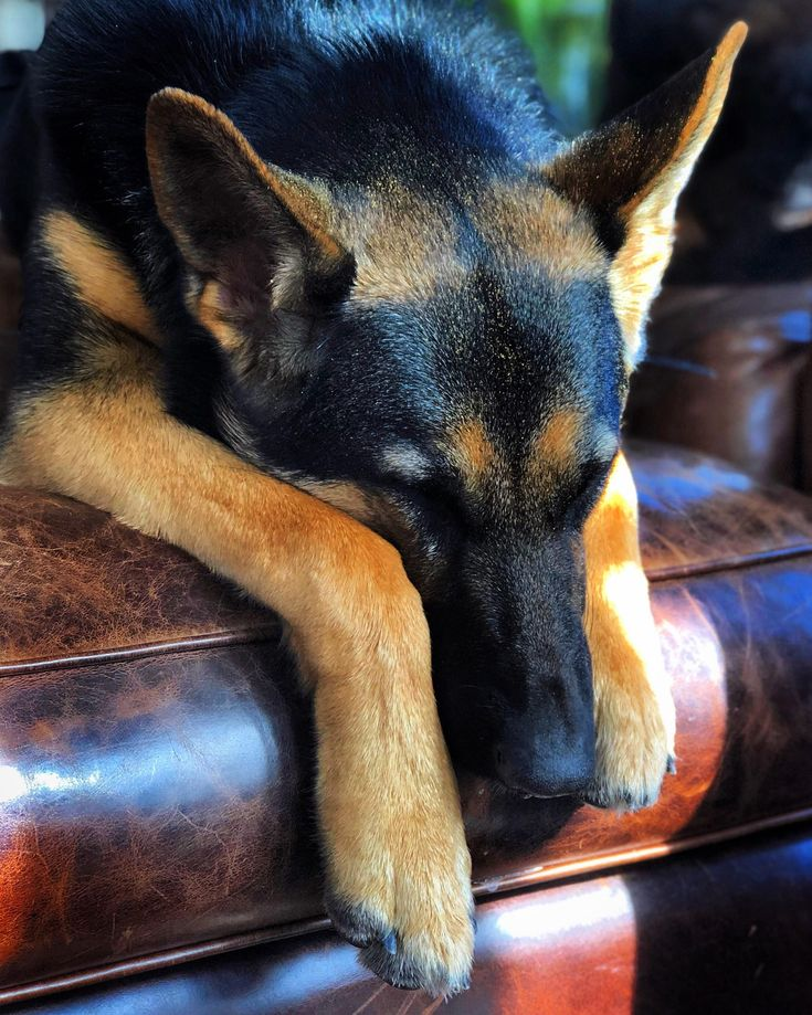 An Exhausted Ellie. (i.redd.it) submitted by Brintwood to