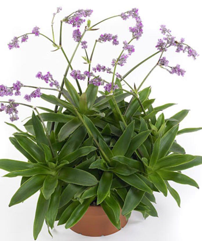 Die Schonsten Hangepflanzen Furs Zimmer Hangepflanzen Pflanzen Zimmerpflanzen Ideen