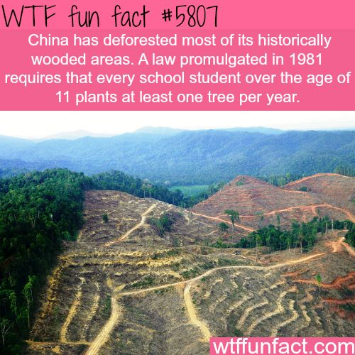 25+ best ideas about Deforestation facts on Pinterest | Save earth ...