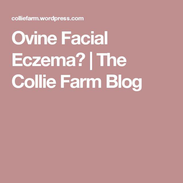 Ovine Facial Eczema?   The Collie Farm Blog