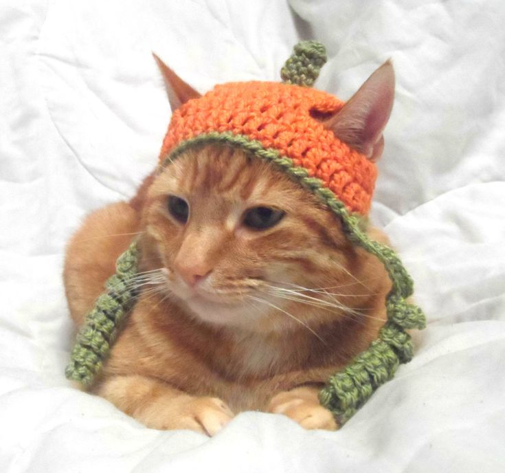 Crochet Cat Hat, Halloween Pumpkin Hat for Cats, Cat Halloween Costume, Novelty Hats for Cats. - pinned by pin4etsy.com