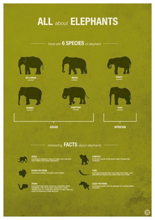 Elephant Species facts infographic. Maybe a little too simple, but it's a very clean design.  And I love the green!! :)