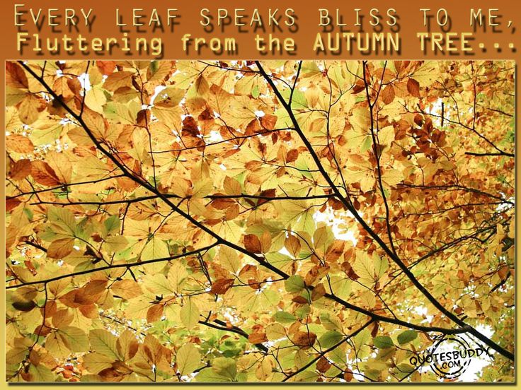 Autumn Quote | Wallpaperxy.com