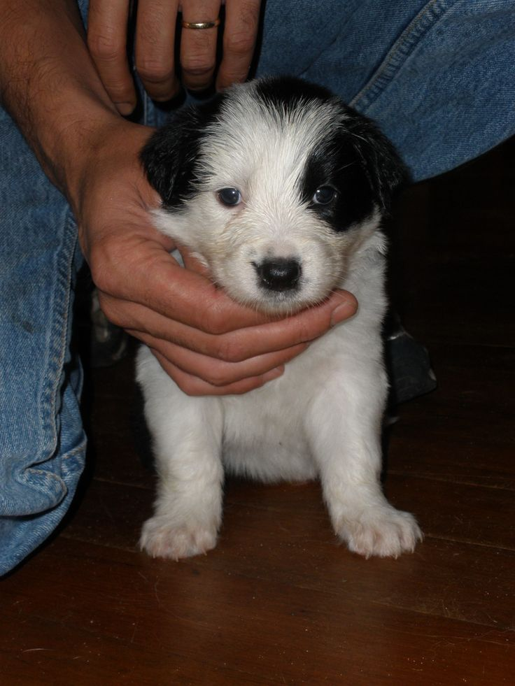 This was piper the day we chose her, so she was very young!