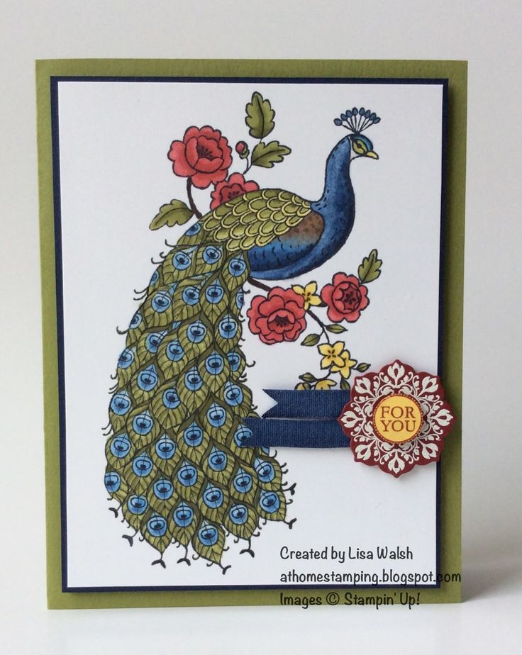 """Stampin Up Perfect Peacock STAMPS: Perfect Peacock, Daydream Medallions, A Round Array INK:  Memento Tuxedo Black, Versamark, Cherry Cobbler PAPER: Old Olive, Night of Navy, Whisper White, Cherry Cobbler, Daffodil Delight OTHER:  Blendabilities Markers in Old Olive, Night of Navy, Crumb Cake, Cherry Cobbler, Daffodil Delight, Smokey Slate, and the Color Lifter, 1/2"""" circle punch, Floral Frames Framelits, 1/4"""" cotton ribbon in Whisper White and colored with the medium Night of Navy…"""