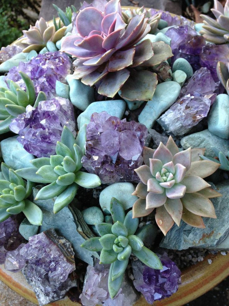 Purple and mint green succulent plants with aqua blue stones and the amythests.