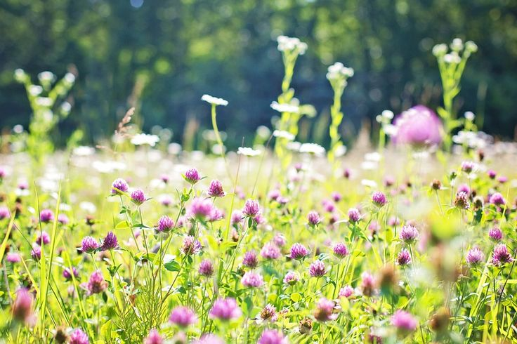 Follow our guide to grow your own wildflower meadow and welcome all sorts of wildlife to your garden! http://bit.ly/wildflower-meadow