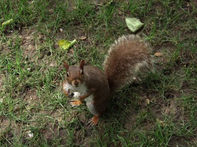 How to keep squirrels away from your garden quick - How to keep squirrels away from garden ...