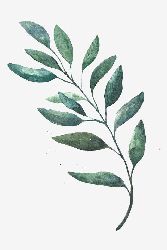 Watercolor Leaves Png And Psd Folhas De Aquarela Desenho De