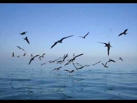 Sergio Lopes - Para onde vão as aves