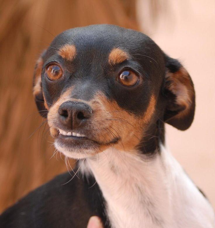 Nevada SPCA on Twitter Puppies, Dog adoption, Jack