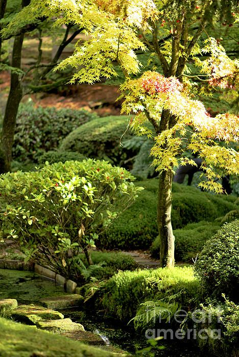 A sunny glimps into a beautifully landscaped garden.