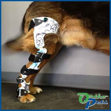 The OrthoPets dog knee brace is researched, tested & custom made for your dog's torn ACL, cruciate ligament or other leg injuries. As seen on Animal Planet.