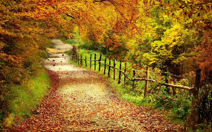 Beach Pathways | autumn-forest-trees-leaves-pathway-fence-nature