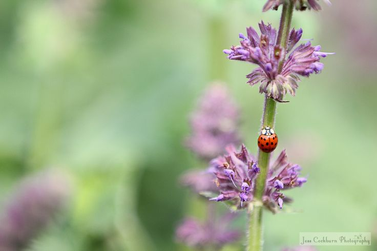 A lovely little ladybug for the spring