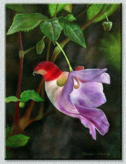 Parrot orchid