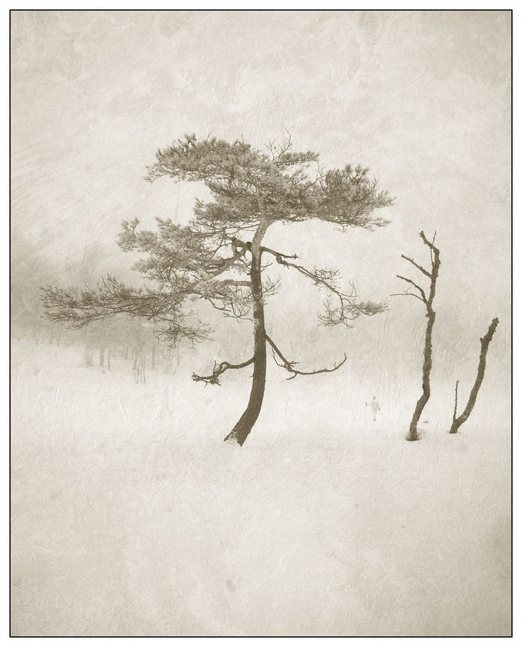 This has to be one of my favorite pine photos, this tree has such character.