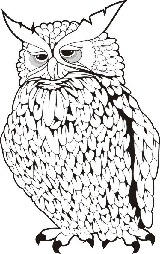 1293 best Owls, black & white images on Pinterest
