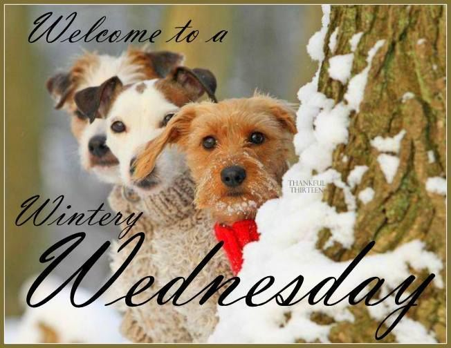 Image result for good morning Wednesday snowy blingee quotes