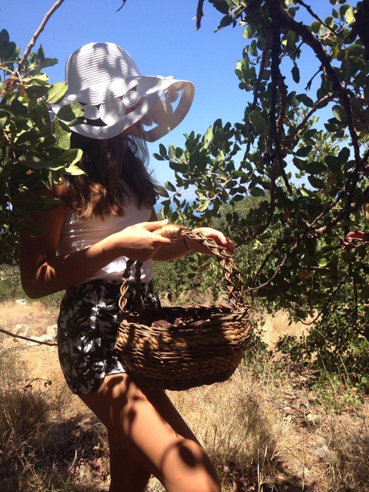 Pure philosophy's carob farm in Crete