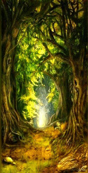 Druids Trees:  Tangled #woods.