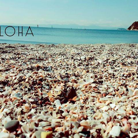 【uilani.73】さんのInstagramをピンしています。 《🐚🐚🐚 大好きなビーチコ💟💟💟 テンションあがりっぱなし⤴☺ 週末のワークショップのために天然の貝を集めに行ってきました🌊🐶 これから潮抜きして 天日干しして 厳選して と、いろいろ手間がかかりますが幸せな時間 ヽ(*´∀`)ノ♪ ワークショップお楽しみに🌈🌈🌈 ・ #貝塚#ビーチコ#海 #貝殻#ビーチ#beach#beachlife#ビーチライフ#shell#シェル #お友達のわんこ #海のある生活#チワワ #チワワロングコート#aloha#湘南#鵠沼海岸》