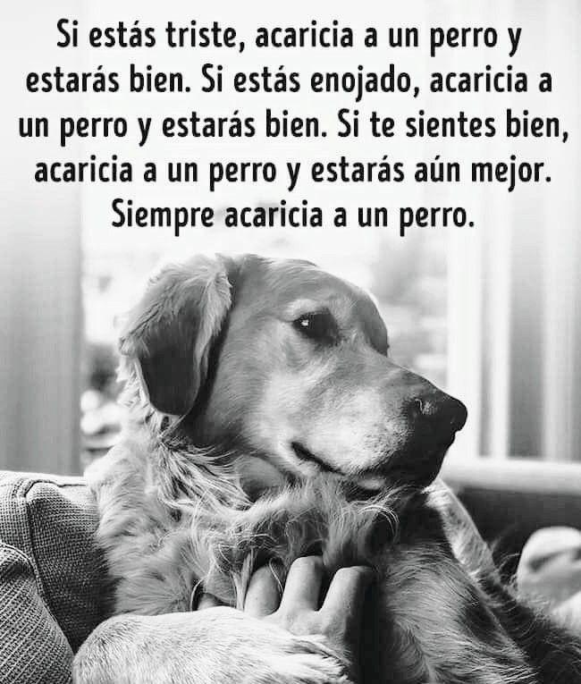 Acaricia A Un Perro Perros Frases Animales Frases Amor De Perro