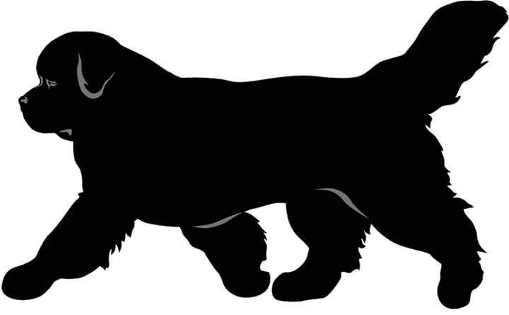 112 best nowofundland images on pinterest dogs newfoundland dogs and big dogs. Black Bedroom Furniture Sets. Home Design Ideas