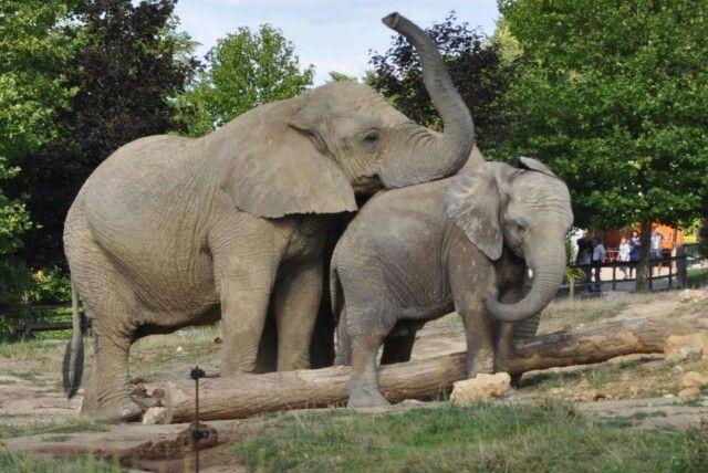 Zoo Parc de Beauval/Saint-Aignan, Centre