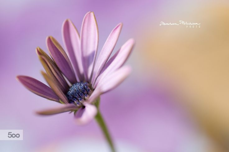 Shy in the morning by Barbora  Polivkova on 500px
