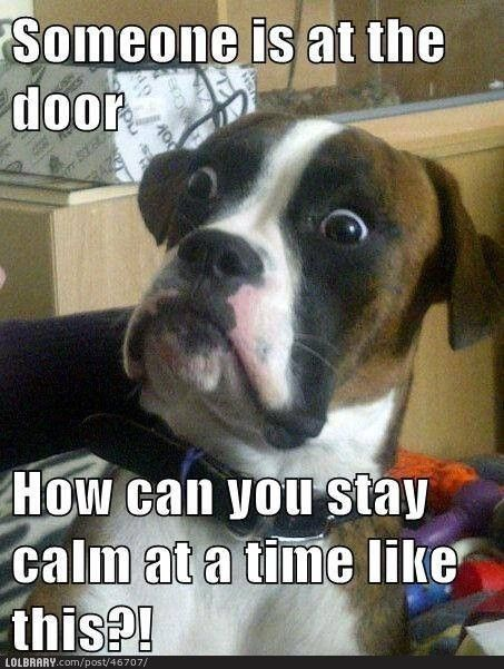 Doorbells are the panic buttons for dogs