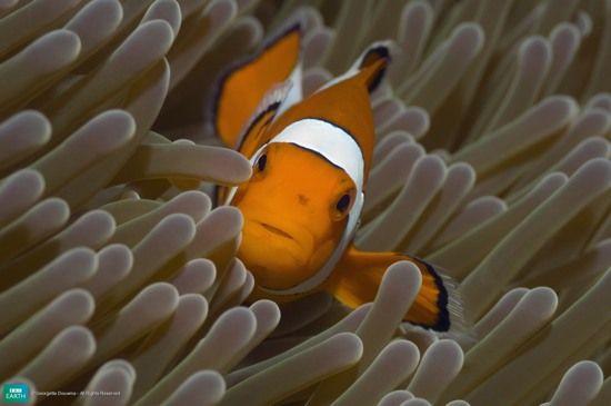A vida é feita de cores. E, para os animais, elas não são apenas parte de um visual arrojado, mas muitas vezes fazem parte de processos biológicos e tem funções na sua vida. Confira essa lista e descubra 10 dos animais mais coloridos do mundo