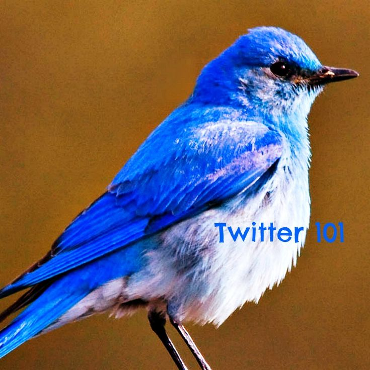 Yesterday I was facilitating a Twitter 101 Session at edcampLA and a couple of teachers who were new to twitter asked for a Twitter 101 or Twitter for beginners blog post. We didn't have access to ...