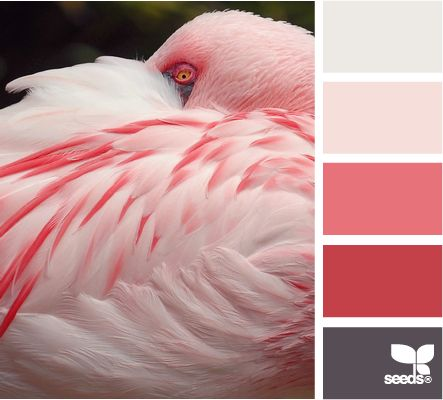 Feathered Pink
