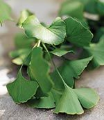Anti-Aging Effects of Ginkgo Biloba | Life Extension - Compared to the placebo group, subjects who took ginkgo extract saw significant improvements in their self-perceived mental health and quality of life. Participants who took ginkgo extract performed markedly better on action and reaction tests, and also reported improved mood, providing further evidence of the efficacy of ginkgo extract. Gingko also improves peripheral artery disease, and improves circulation and retinopathy in…