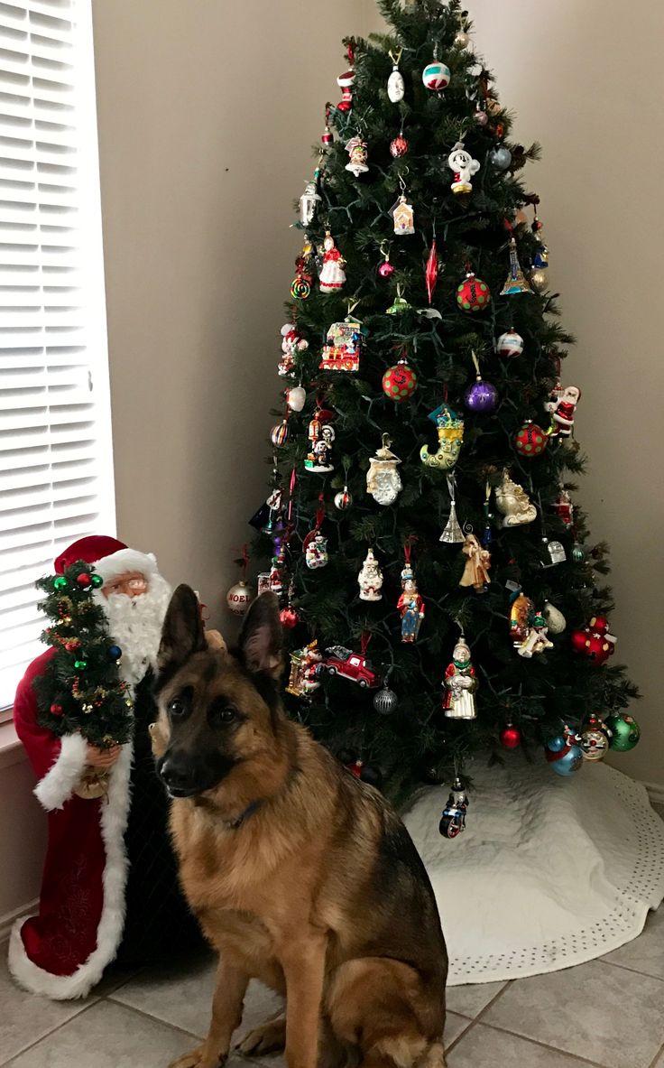 Ozzy - Merry Christmas!