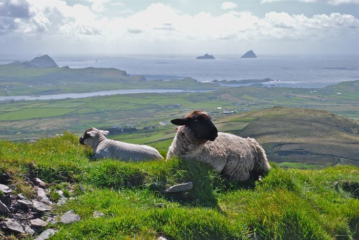 Cahersiveen,  Skelligs in the distance, Co. Kerry, Ireland
