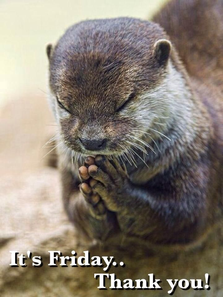 211 best happy friday images on pinterest humorous