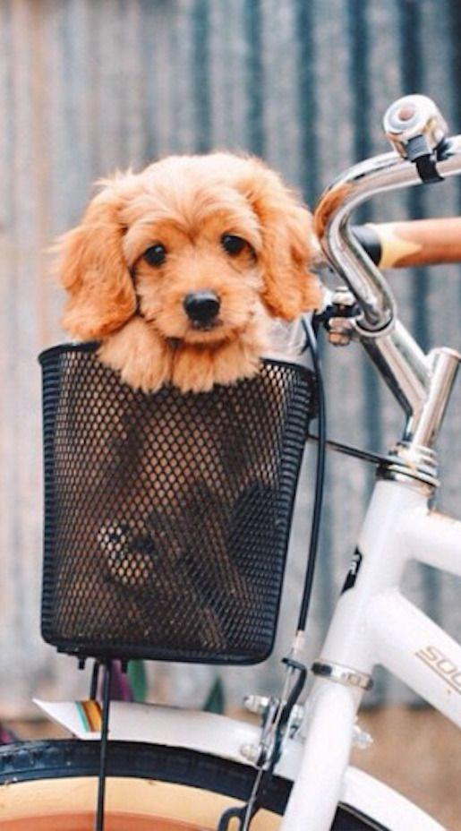 Puppy in a basket ❤