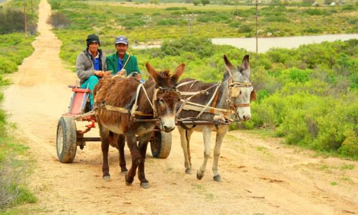 Donkey cart through the eyes of LondonBoy