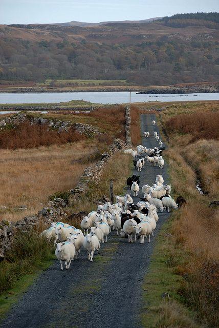 """Isle of Mull, Scotland.   """"Hi ho, hi ho, it's off to work we go....."""""""