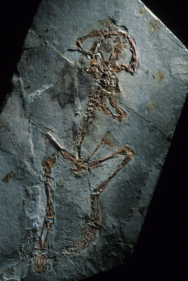 ✮ This 124 million year old frog fossil comes from Sihetun, China
