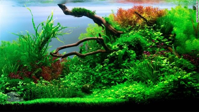 Pimp My Fish Tank This Is The Eerie Beautiful World Of Aquascaping Aquariums Aquascaping