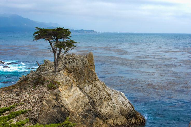 Morze, Skała, Drzewo