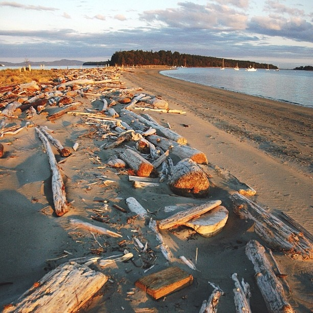 Golden hour at Sidney Spit, part of the Gulf Islands National Park Reserve. A magical time of day, a magical place. Photo by @Tyler Brink #explorebc