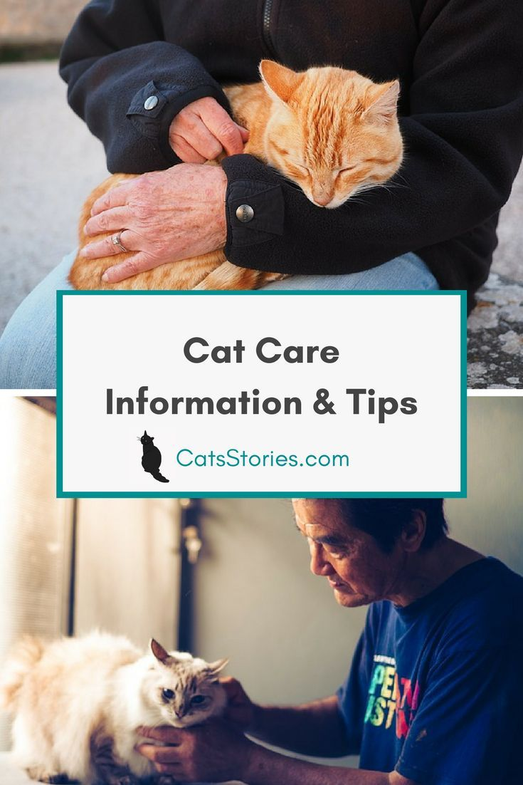 Cat Care Information & Tips You Need to Know About | CatsStories.com
